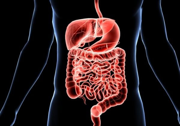 Doctor Evaluation of Digestive Function & What Results Mean