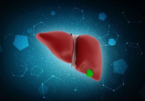 Proper Doctor Evaluation of Liver Function
