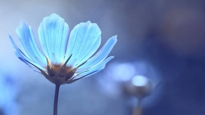 Blue Beauty on World Ocean Day: How to be blue beautiful every day