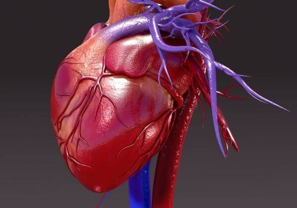 Proper Doctor Evaluation of Heart Function & What the Results Mean