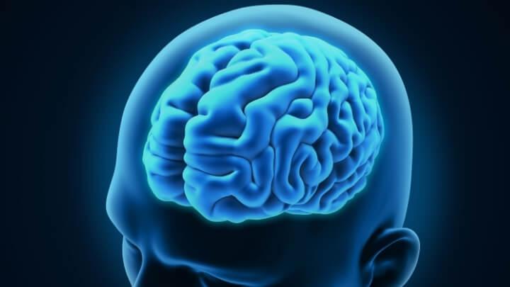 An illustration of human brain