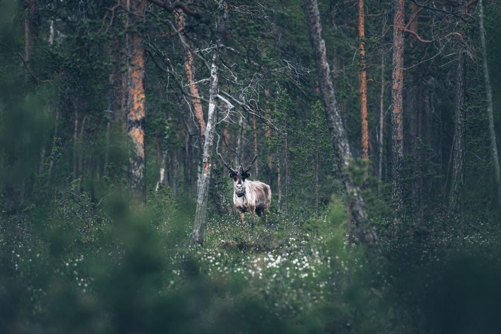 Eeva Makinen - Photographer of the month - tip 2