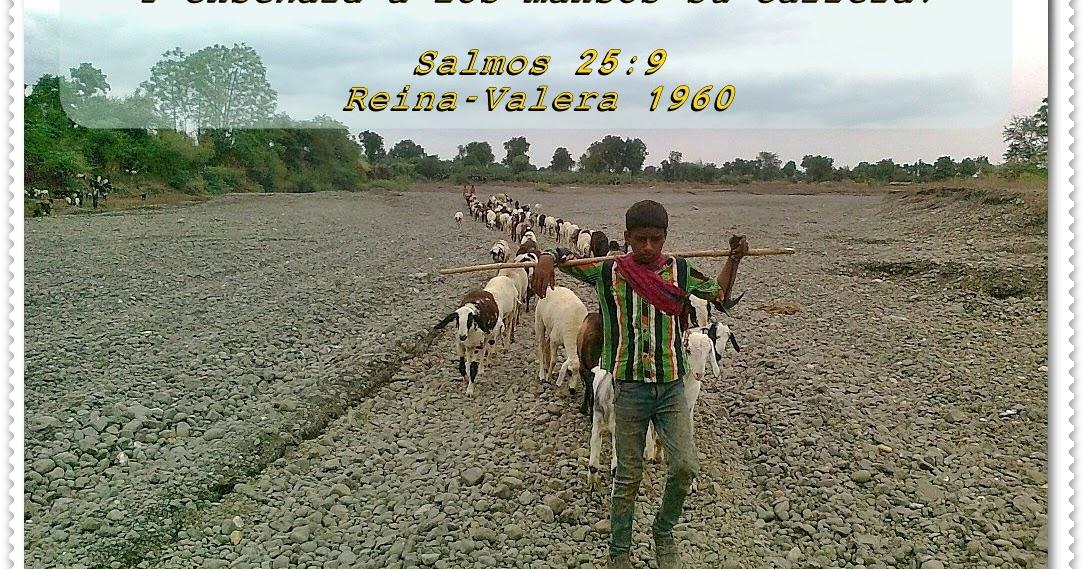 LA PUNTA DE LANZA DE FINEES: La iglesia es profética y misionera.