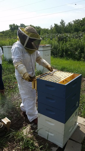 Beginner Beekeeping Series