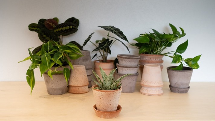 Moss - Sip & Plant: Meet Your Next Houseplant
