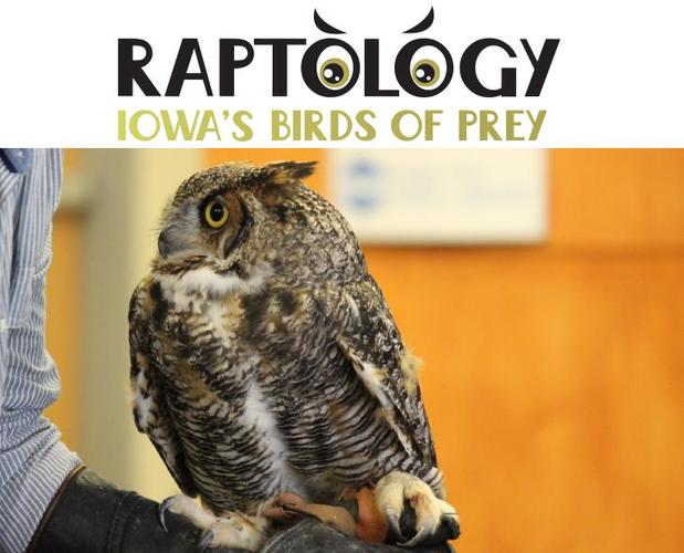 Stories & More Special: Birds of Prey with Raptology