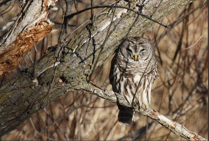 EVENT FULL: Owl Hike