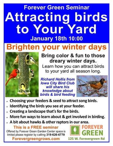 Attracting Birds to Your Yard