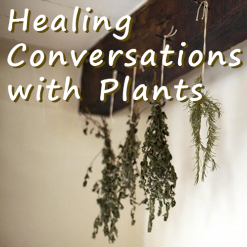 Healing Conversations with Plants at Prairiewoods