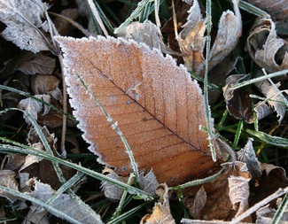 Search frosted elm