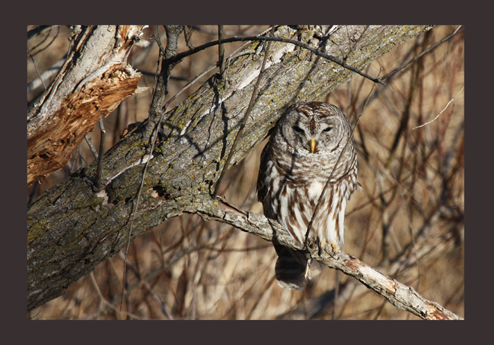 Wickiup Owl Hike