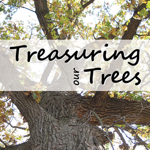 Treasuring Our Trees, Part 3