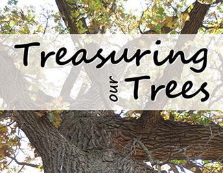 Search treasuring our trees
