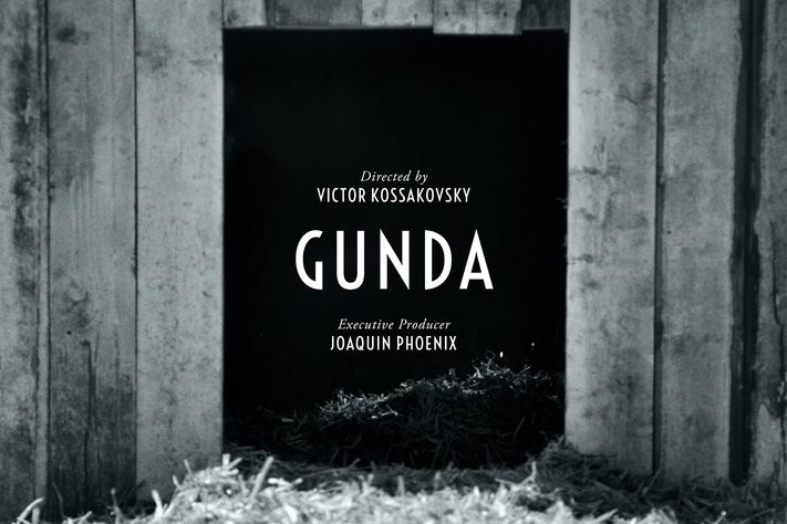 Virtual Film Screening: GUNDA