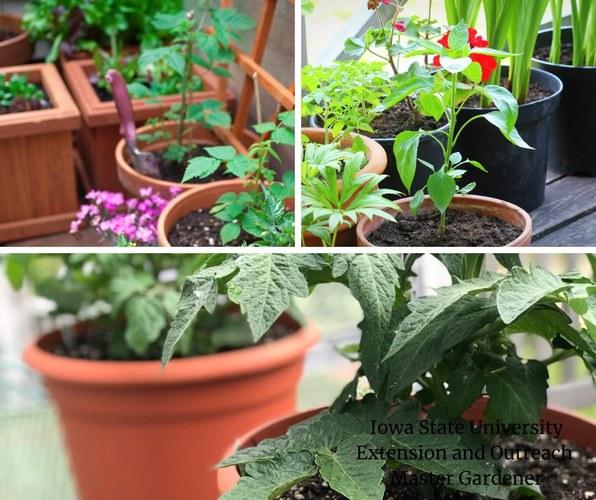 Master Gardener Spring Plant Sale