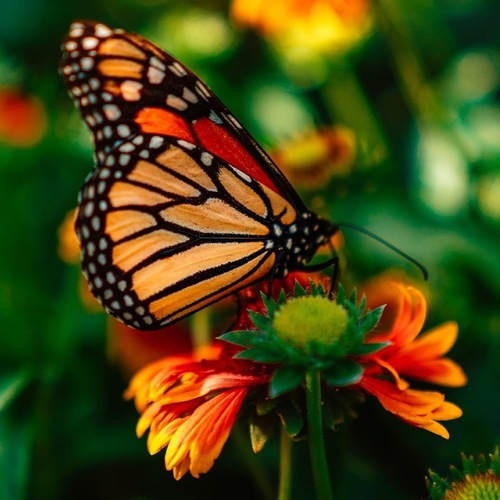 Blooms and Butterfly Fest