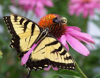 Search pollinator habitat