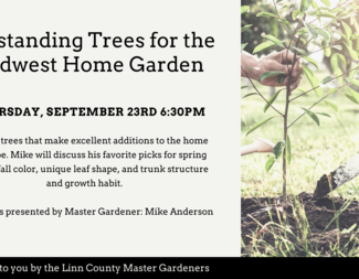 Search outstanding trees for the midwest home garden