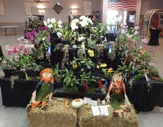 Search 2019a eastern iowa orchid society display 2019   orchids are a scream