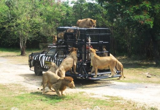 Safari World Bangkok with Transfer