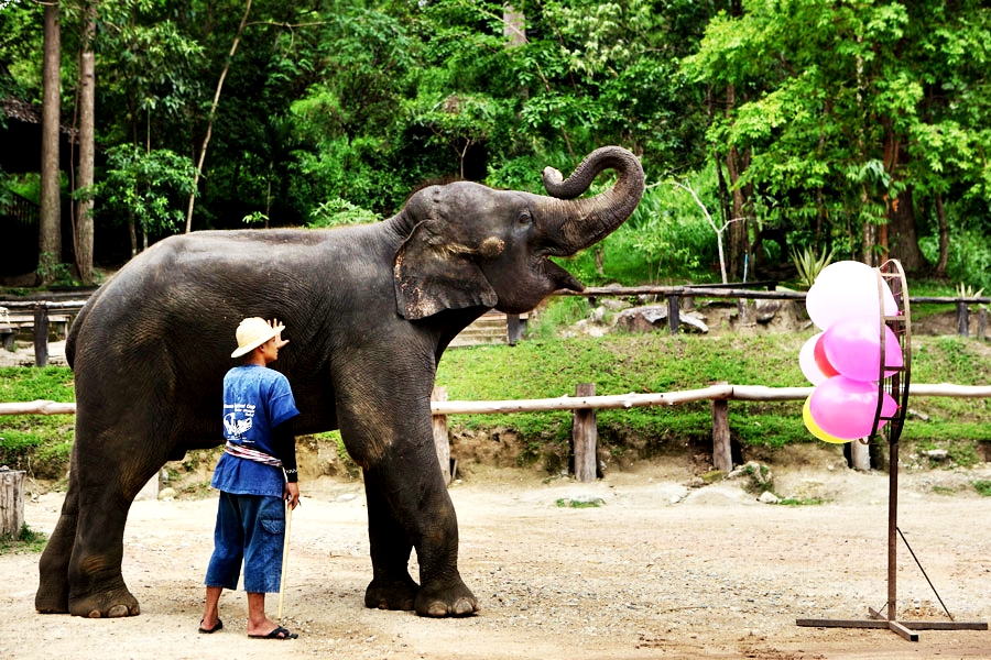 One Day Elephant Safari Tour from Chiang Mai