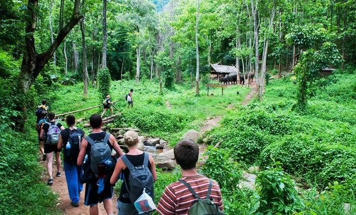 ทัวร์เดินป่า ให้อาหารและอาบน้ำให้ช้าง ล่องแพไม้ไผ่ เที่ยวน้ำตกแม่วาง