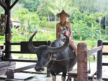 Eco Safari Tour Elephant Trekking Ox-Cart Riding