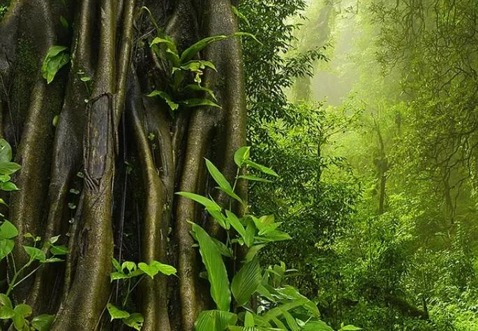 Jungle Trekking Koh Chang
