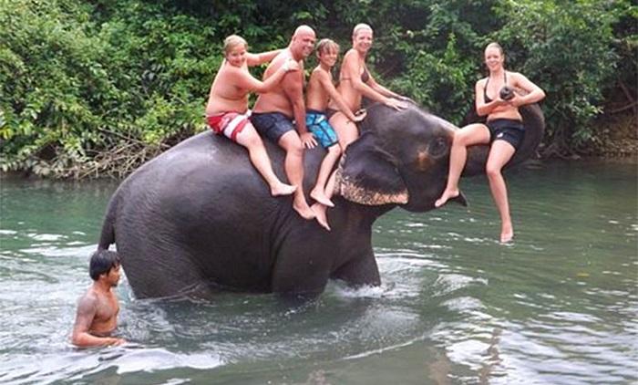 ขี่ช้าง ชมธรรมชาติ