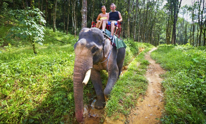 Koh Chang Safari Tour + Elephant Trekking