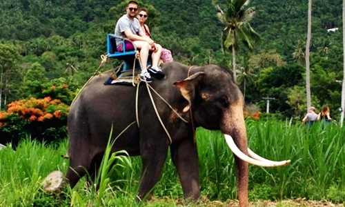 Full Day Eco Adventure Samui