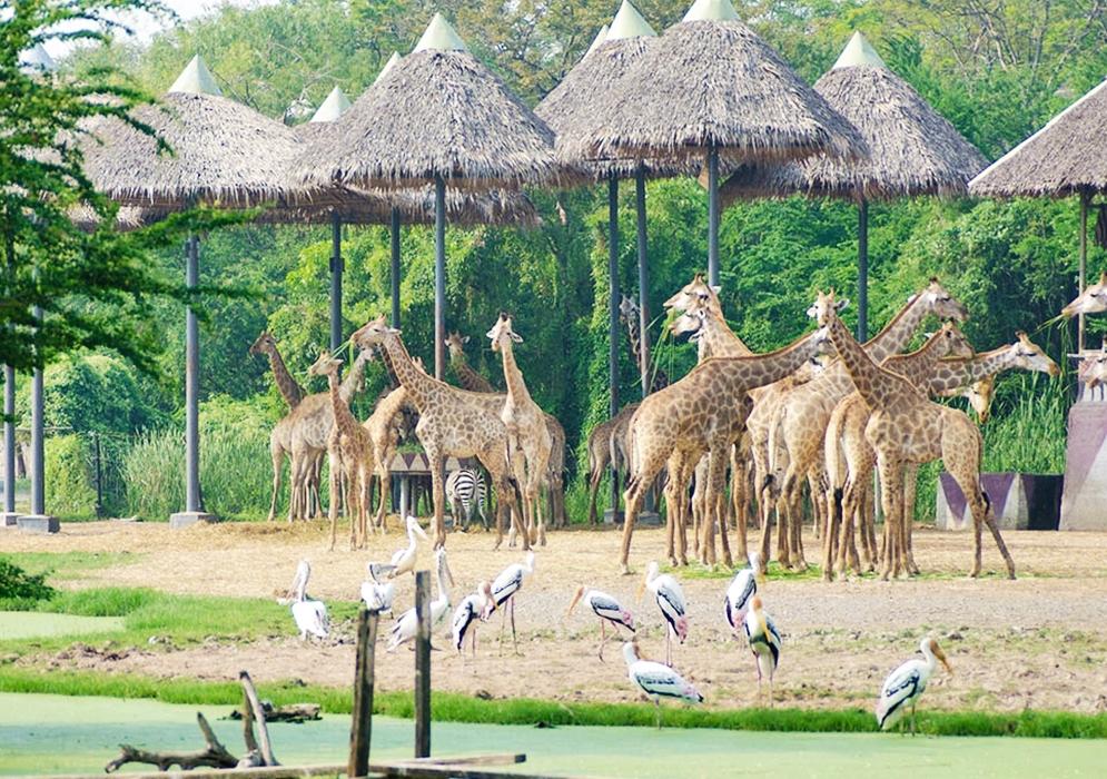 ตั๋วเข้าชมสวนสัตว์ซาฟารีเวิลด์ (ราคาสำหรับนักท่องเที่ยวต่างชาติ)