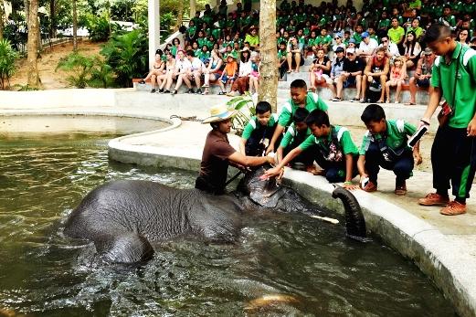 ทัวร์ขี่ช้างและชมการแสดงช้างในเกาะสมุย