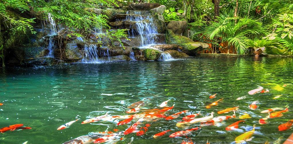 Phuket Botanic Garden