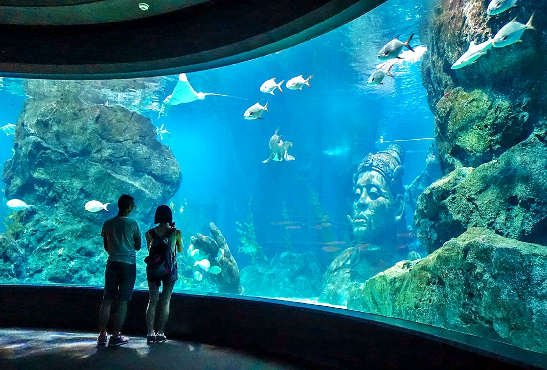 2 in 1 Combo Ticket: Sea Life Bangkok + Dinner on 75, 76 or 78 floor at Baiyoke Sky Hotel