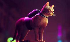Q&Hrej - Ty nejlepší herní kočky