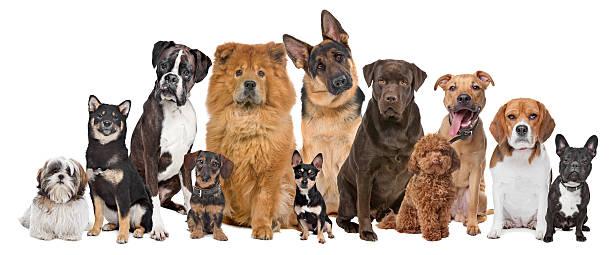 Pokud byste měli jmenovat jednu věc, která vám ve Vigoru chybí - proč je to právě pes a jaká rasa by se do hry hodila?