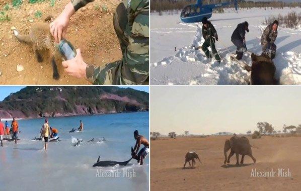 Vídeo emocionante mostra animais sendo resgatados e salvos por humanos