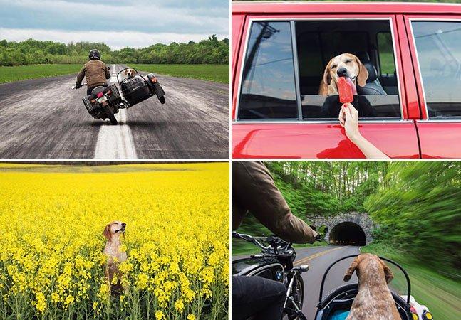 Maddie, a cachorra mais carismática da internet, sai em nova aventura com seu dono