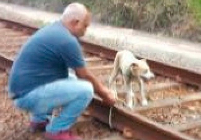 Cachorro preso a trilhos no Recife  é salvo por condutor atento
