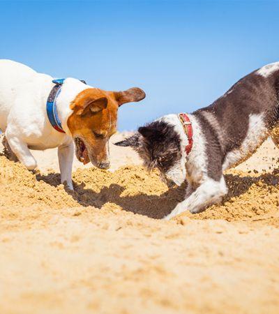 Afinal, por que os cachorros amam tanto cavar buracos?
