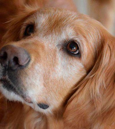 Eles descobriram por que seu cão adotado não dormia e o motivo vai te emocionar