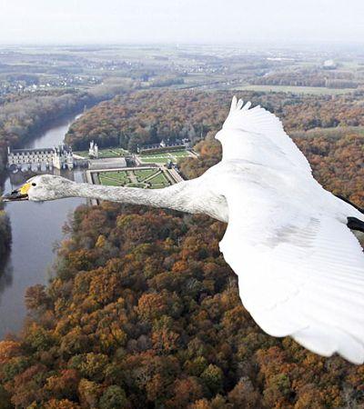 Este vídeo oferece a sensação exata de estar voando com um grupo de pássaros
