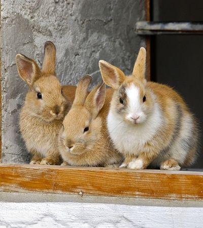 Califórnia vai banir venda de cosméticos testados em animais