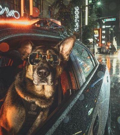 Polícia canadense dá show de amor com seus cães nos pôsteres de 2019