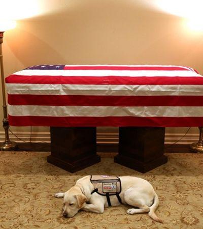 Cão não abandona caixão do tutor George H. W. Bush e emociona a internet