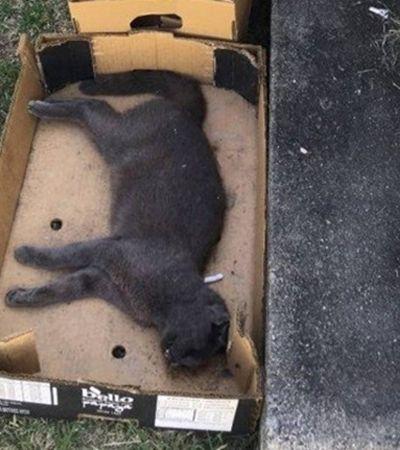 ONG acusa funcionários de envenenar gatos em Carrefour do Rio de Janeiro