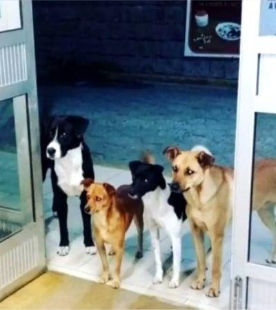 Quatro cães aguardam apreensivos na porta do hospital enquanto dono faz exames e viralizam