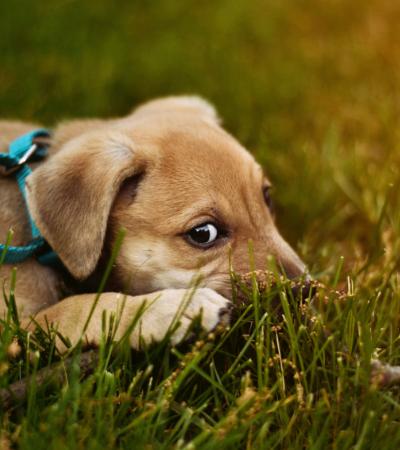 Empresa rastreia DNA canino para identificar donos que não recolhem o cocô de seus pets