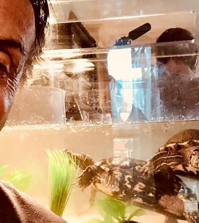 43 anos após filme, Stallone visita tartarugas que aparecem em 'Rocky'